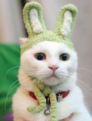 Extraño caso del gato-conejo de Tucumán