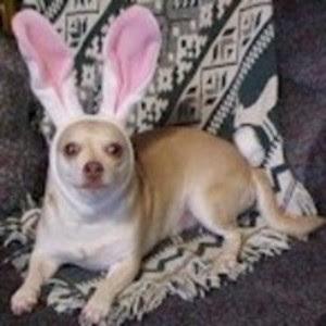 Conejo monta perro