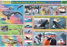 Lamina Día nacional de las ballenas: 22 de Junio