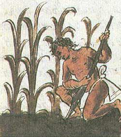 http://4.bp.blogspot.com/_yviRrRoBkLM/SeJvd3iUaEI/AAAAAAAAAGA/cWR18Qs6yfY/s400/agricultura%252520maya%252520copan.jpg