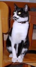 Kedilerim / My cats / Meine Katzen
