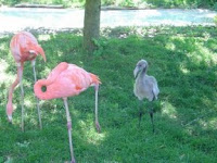 2 pink flamingos and 1 grey one