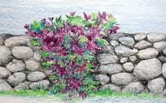 Flowers on a stone wall.