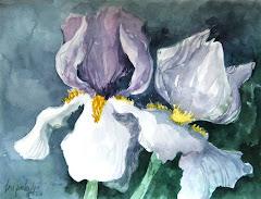 Iris Study - 2