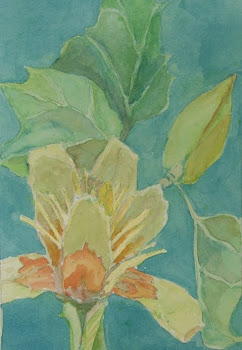 Tulip Tree Blossum