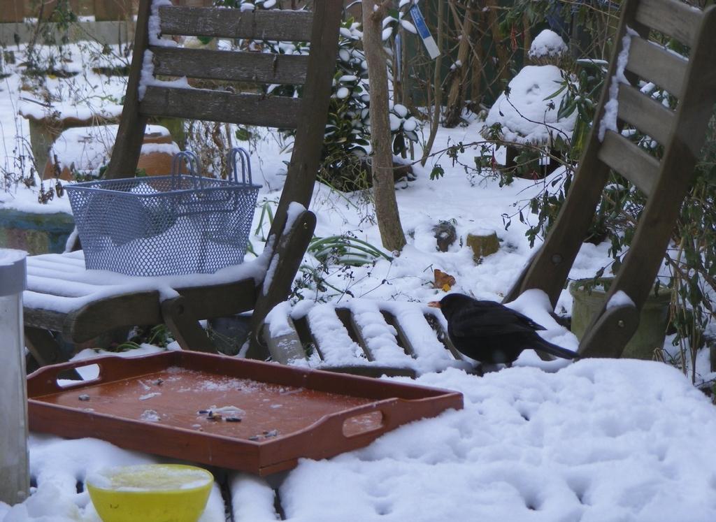 Bijvoeren van de vogels bij vorst de wereld van hendrik jan - Aperitief plateau huis van de wereld ...