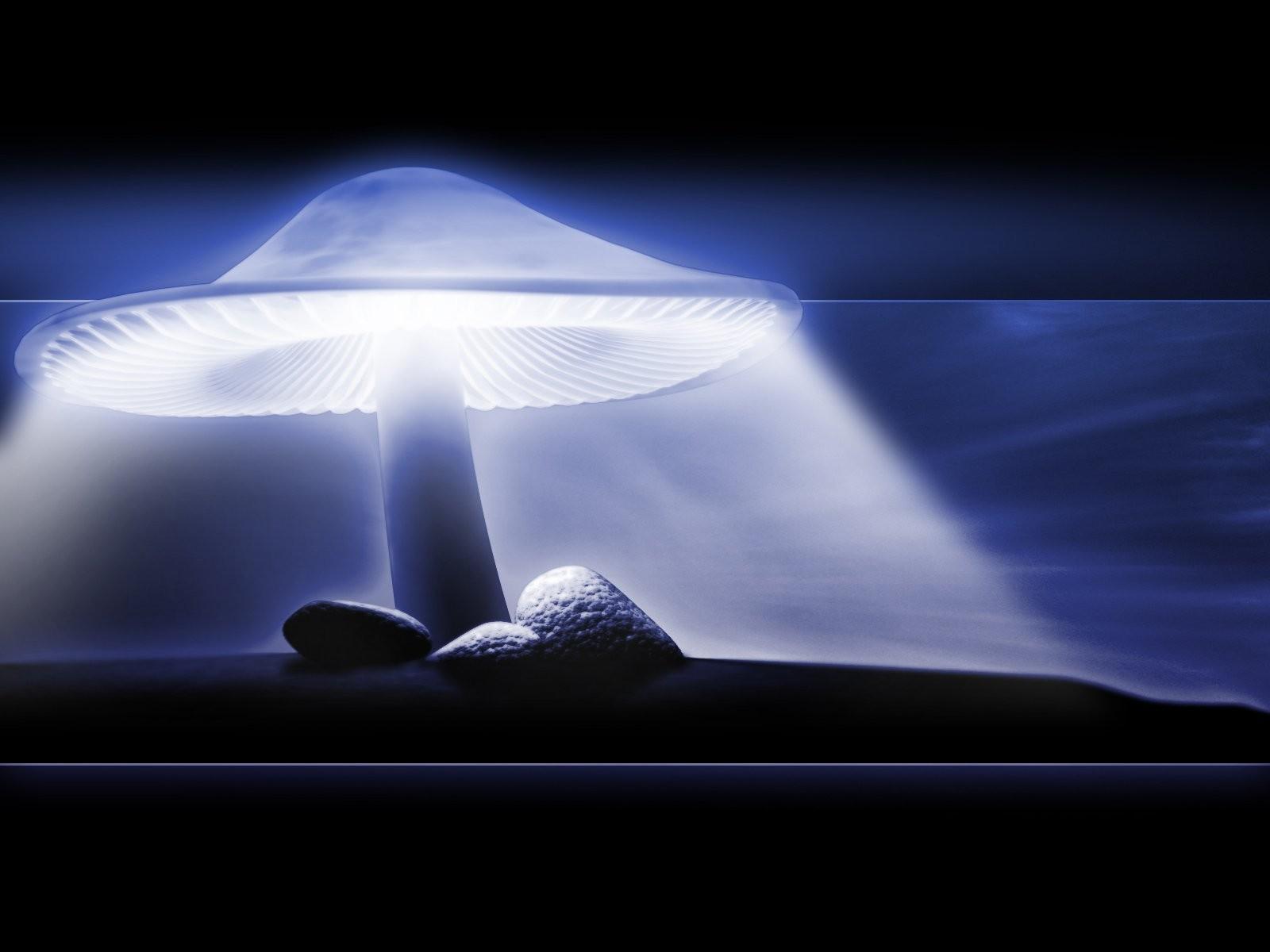 http://4.bp.blogspot.com/_yy-KMXtYQTc/S7j5U5NaTDI/AAAAAAAAABw/S__MrC6S6Io/s1600/Neon_mushroom.jpg