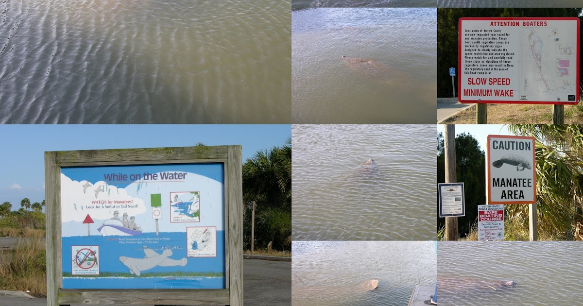 Mosquito lagoon indian river fishing haulover canal for How much is a saltwater fishing license in florida