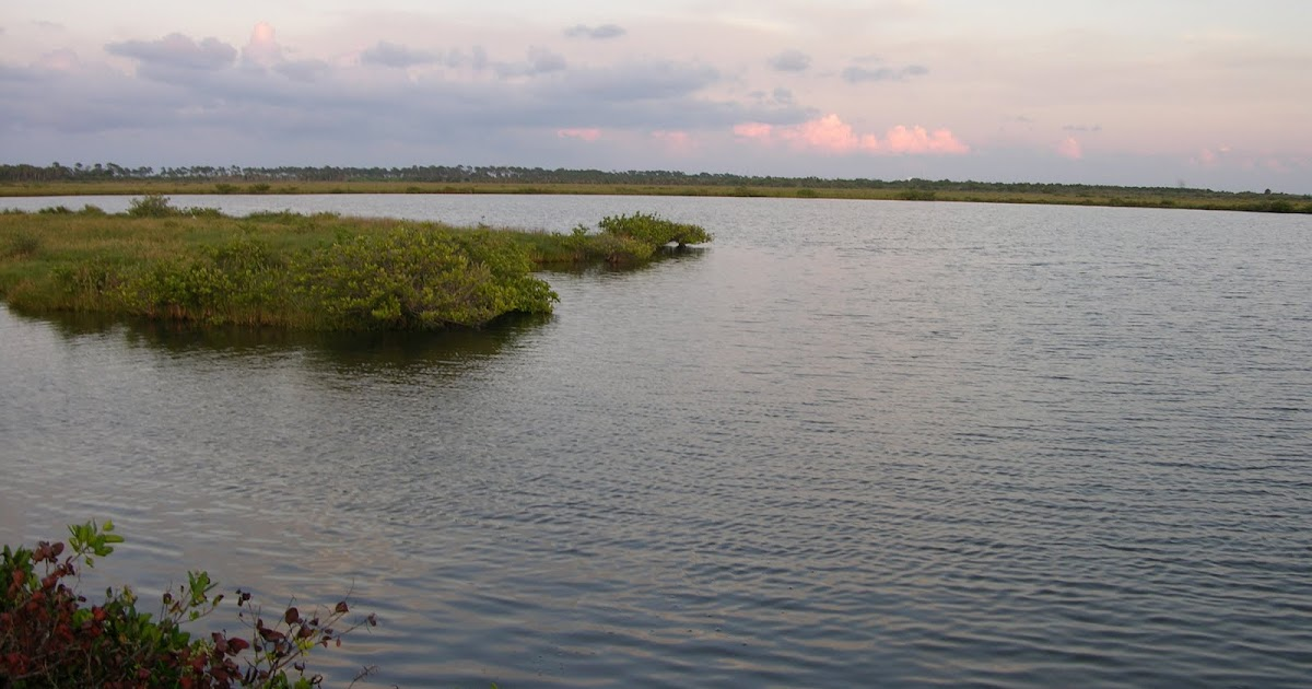 Mosquito lagoon indian river fishing redfish for How much is a saltwater fishing license in florida