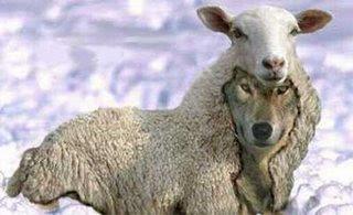 """""""Cuídense de los falsos profetas. Vienen a ustedes disfrazados de ovejas,"""
