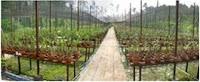 Obyek Dan Daya Tarik Tarakan Borneo