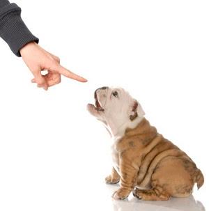 Как отучить собаку делать садки на хозяина?
