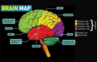 AΓΓΛΙΚΑ ΚΟΡΙΝΗ - ΑΡΤΑ: Your Amazing Brain