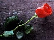 Día de Sant Jordi