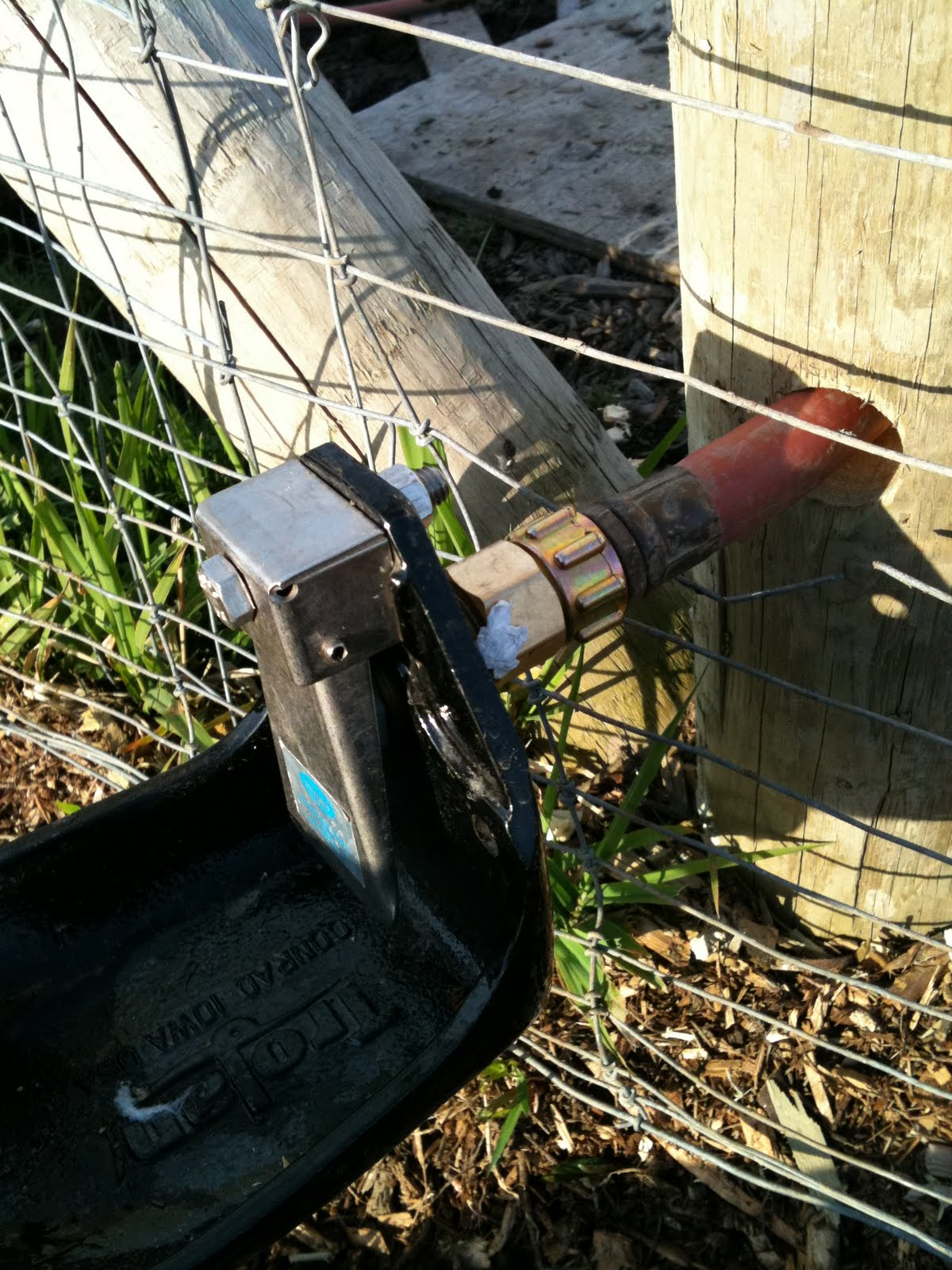 Meat automatic water for pigs or sheep part