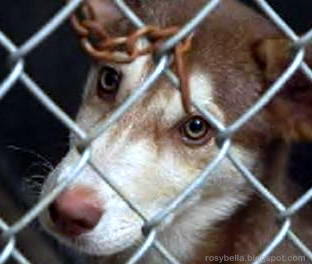 stop hurting animals, animal cruelty, dog fighting, stophurtinganimals.com