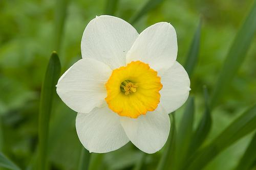 Echo And Narcissus Flower Mythologies: Echo and ...