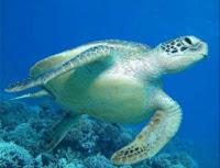 external image turtles_turtlesLrg.jpg