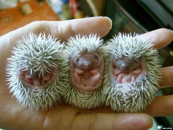 Welcome: Story ~ Baby Porcupines & The Coldest Winter Ever