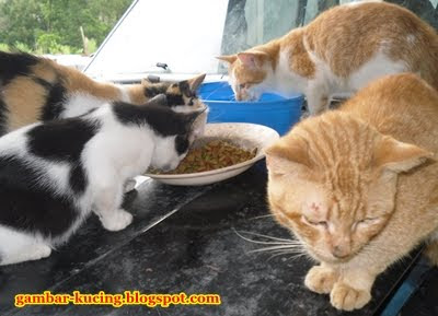 kucingpun pandai merajuk