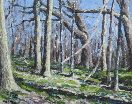 Shrader-Weaver Woods