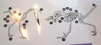 [VE_Bambiraptor_bird]