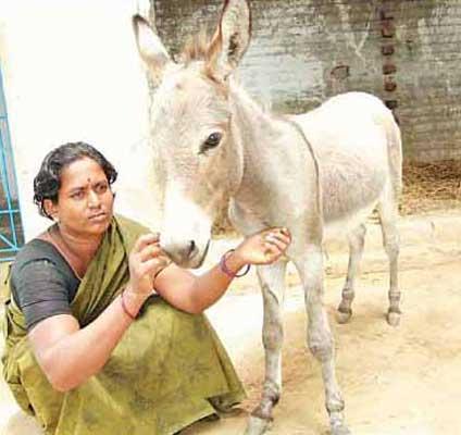 என்னை பார் யோகம் வரும் Donkey_0628