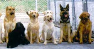 razas perros