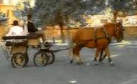 Coches de caballos y carrozas para bodas