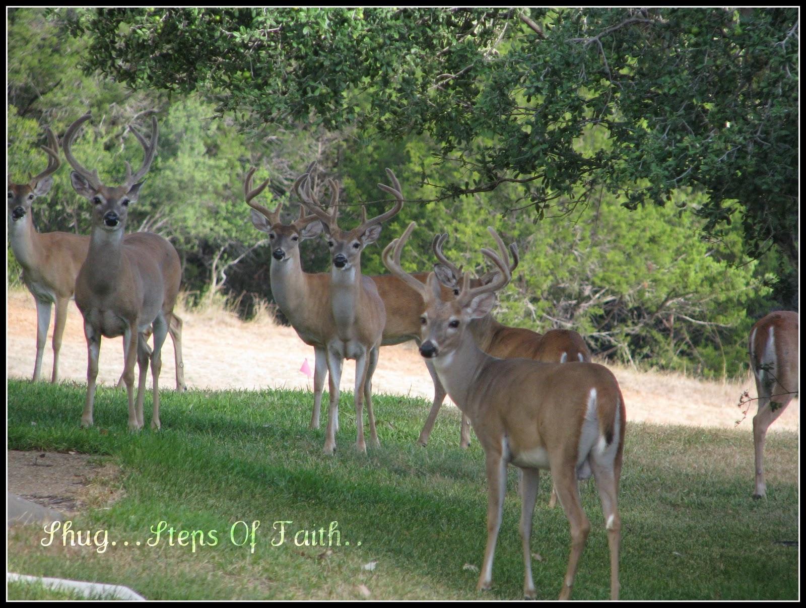 Shug my steps of faith deer season are you kidding me for Deer stand steps