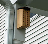 Mason bee home