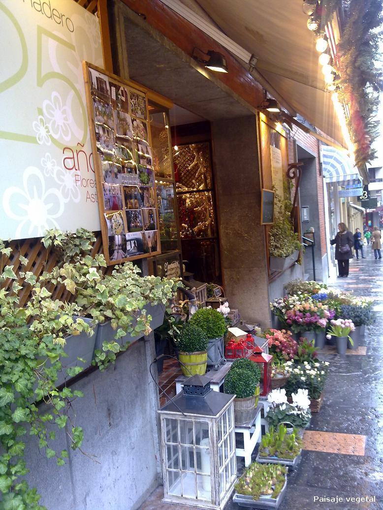 Paisaje vegetal: Por las floristerias del centro de Oviedo
