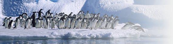 Вся правда о пингвинах!