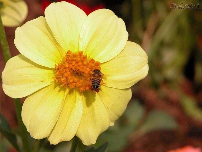 [flores+1051.jpg]