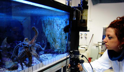 Future Ish Octopus Inspired Robots