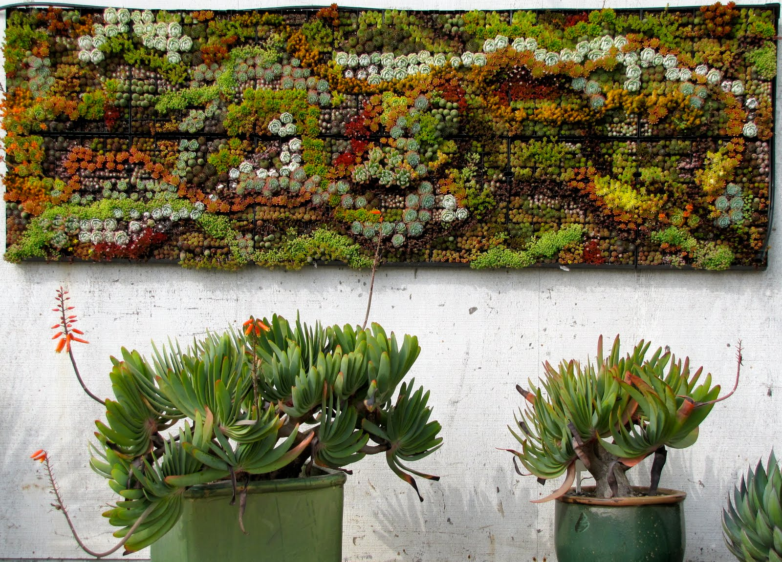 Succulent wall tumblr for Outdoor garden wall decor