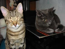 i miei adorati gattini....