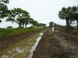 Agricultores y Ganaderos: La Solucion esta en CONSORCIO ENGO