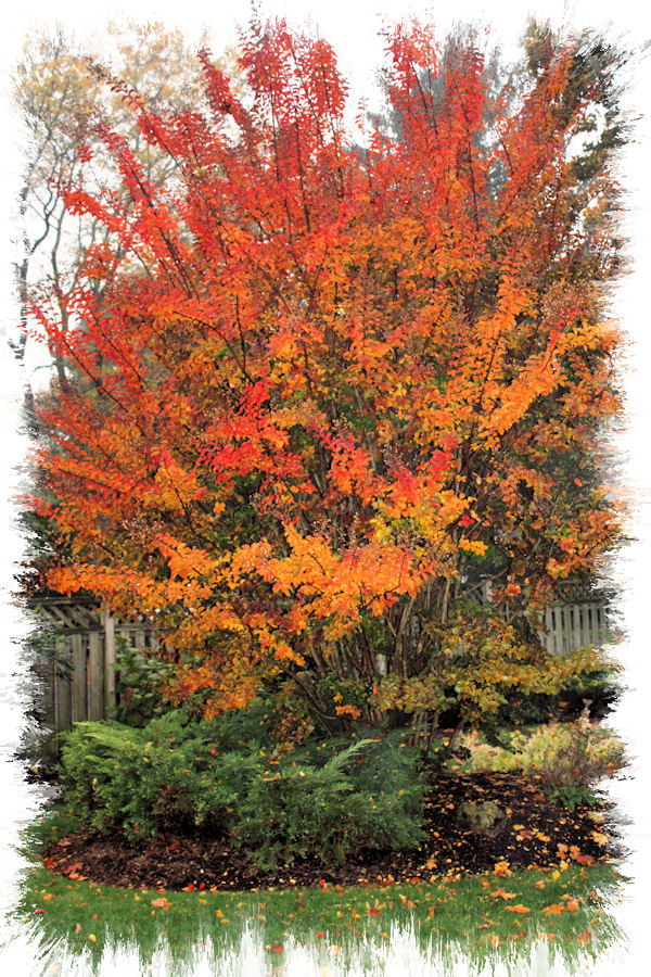 A guide to northeastern gardening october 2010 - Gardening in fall ...