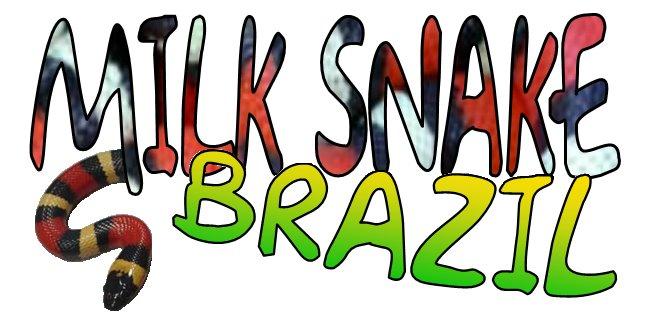 MILK SNAKE BRAZIL