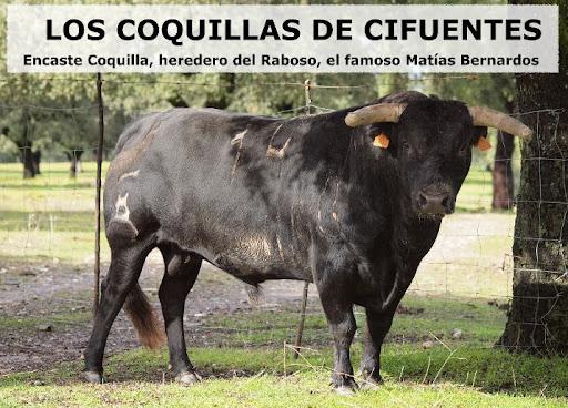 LOS COQUILLAS DE CIFUENTES