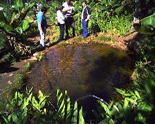 Fiscalização no Parque estadual da serra do mar/SP