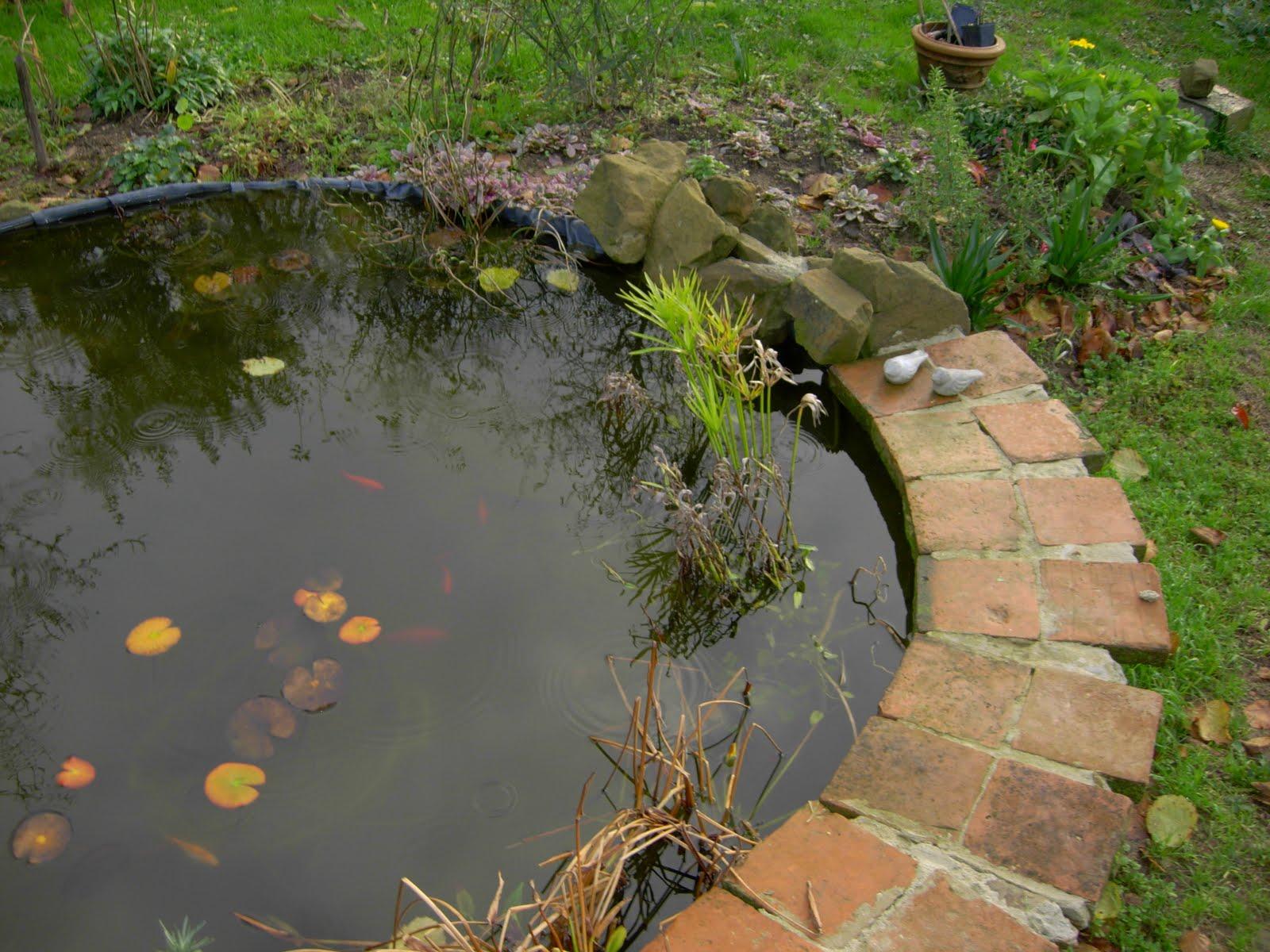 Iris libellule fine novembre la vasca dei pesci rossi for Vasca pesci giardino