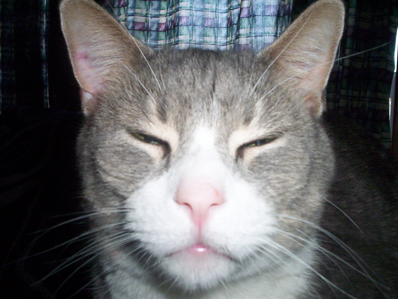 Your Source Of Randomness Stoned Cats Are Stoned