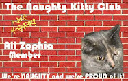 NAUGHTY KITTY CLUB