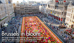 Brussels in bloom