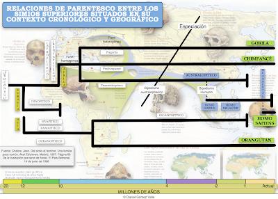 evolucion simios hominizacion
