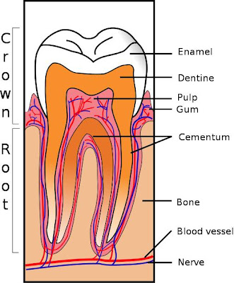 Whole Health Source: Reversing Tooth Decay