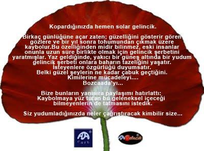 Gelincik - Red Poppy