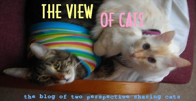 The View Of Cats